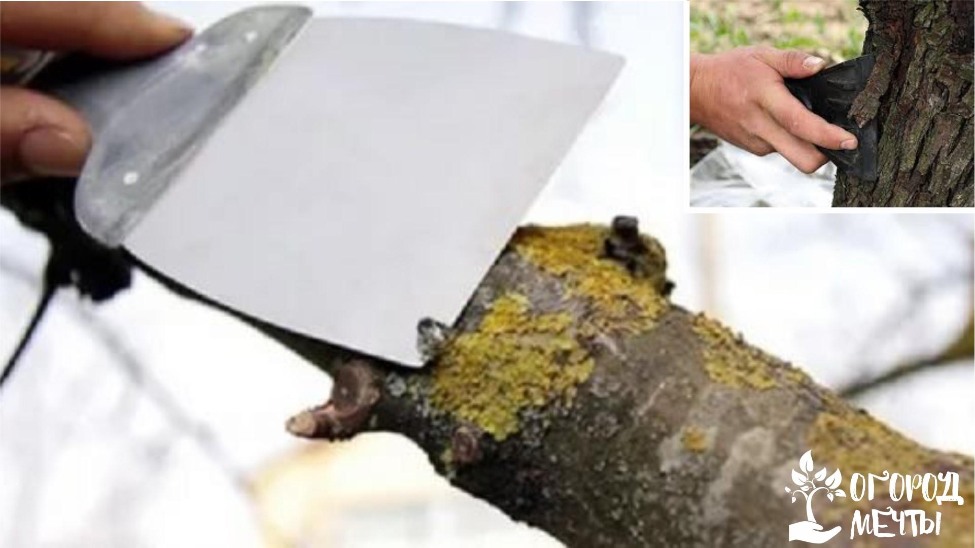 Очищение ствола от отмершей коры и мхов