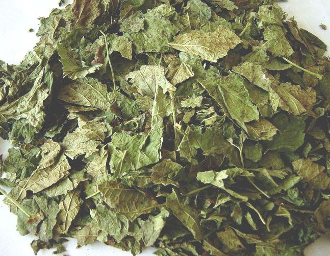 сушить листьев смородины