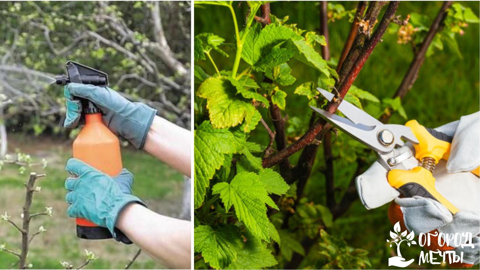 Обработка ягодных кустов и деревьев