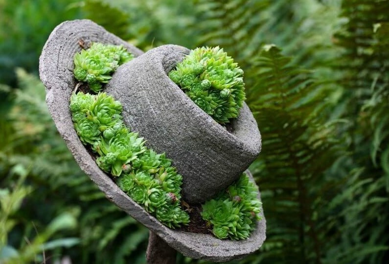 клумба в шляпе