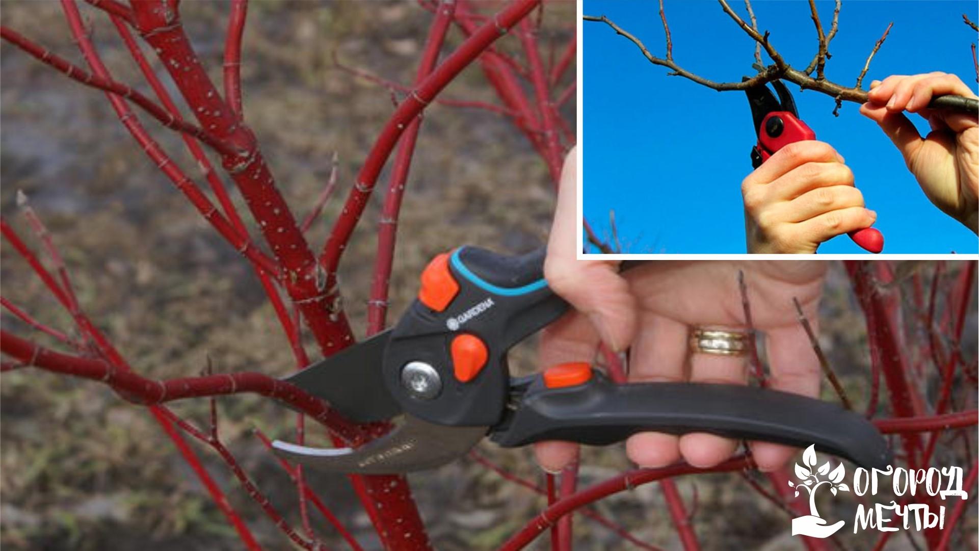 Удаление ветвей и побегов