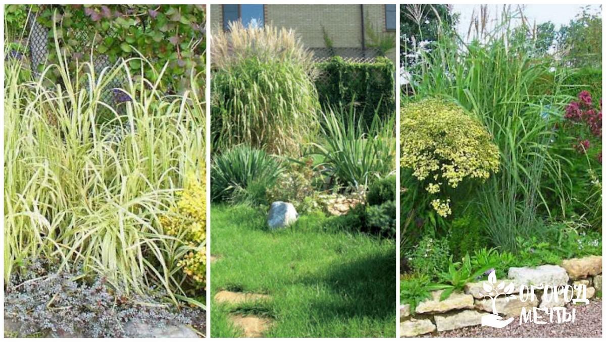Декоративные травы аранжировки