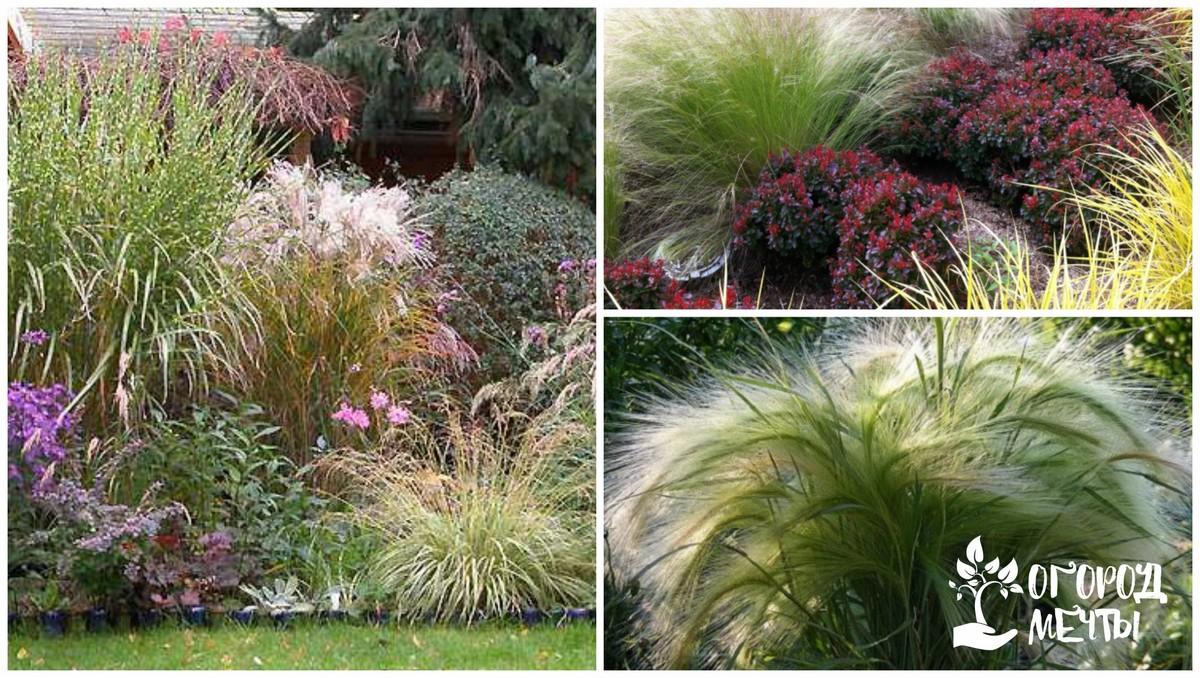 Декоративные травы преимущества