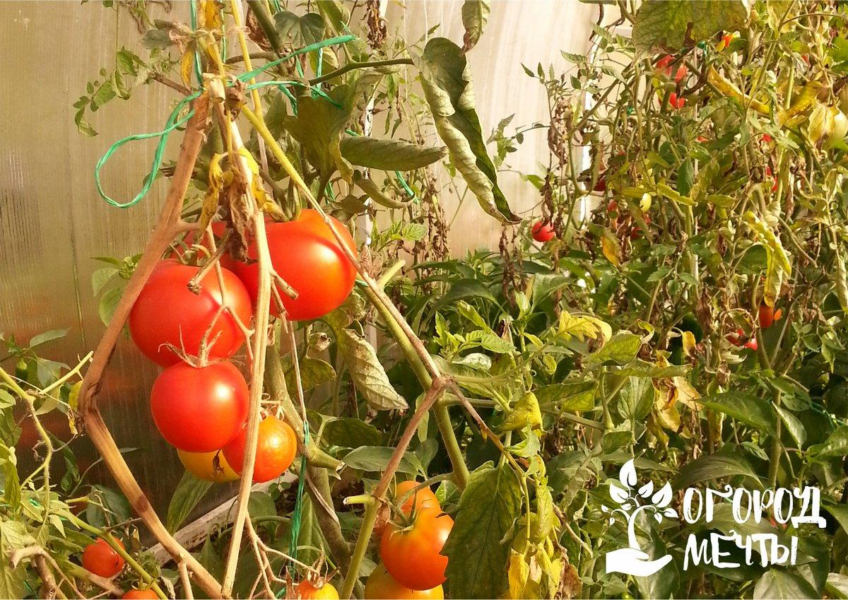 Более длительный сезон выращивания