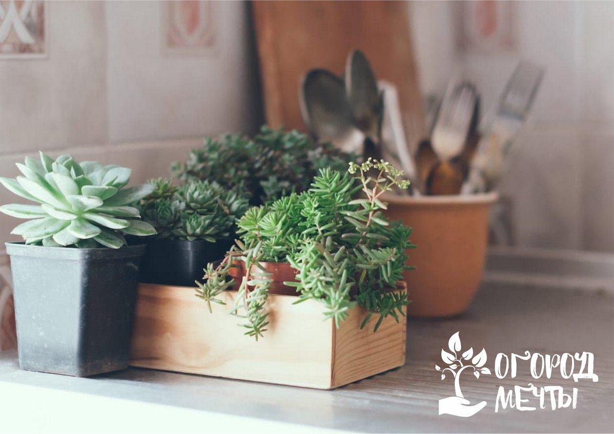 Топ-5 натуральных средств для удобрения и защиты комнатных и садовых растений