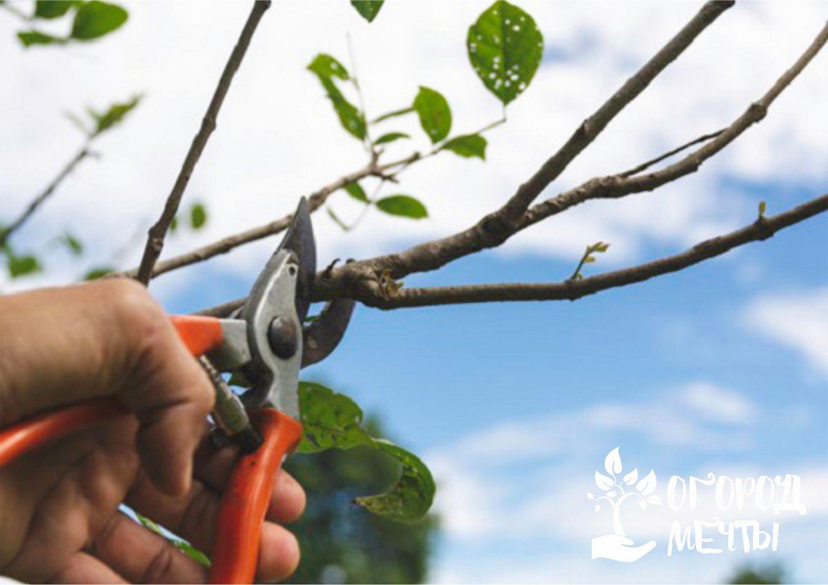 Обрезка растений - это простое и обязательное мероприятие для каждого садовода