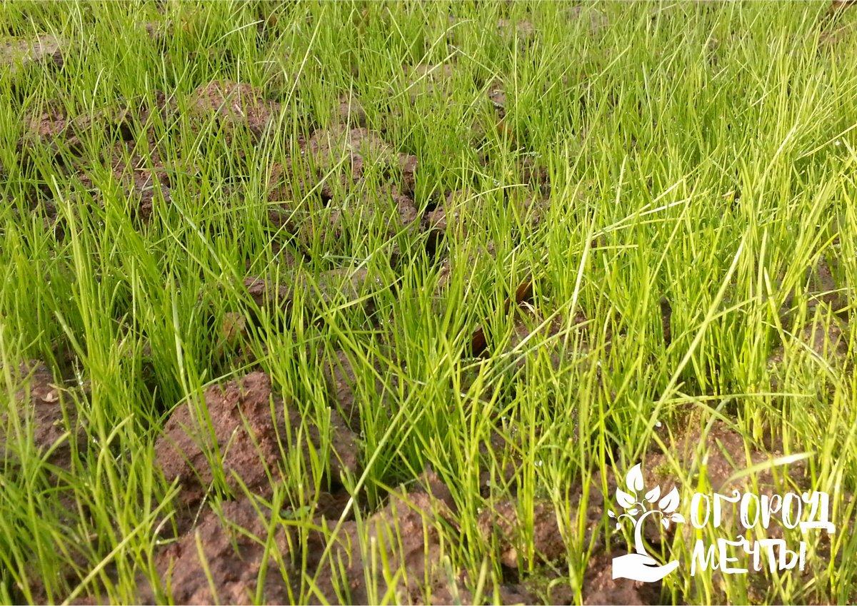 1. Подготовка почвы