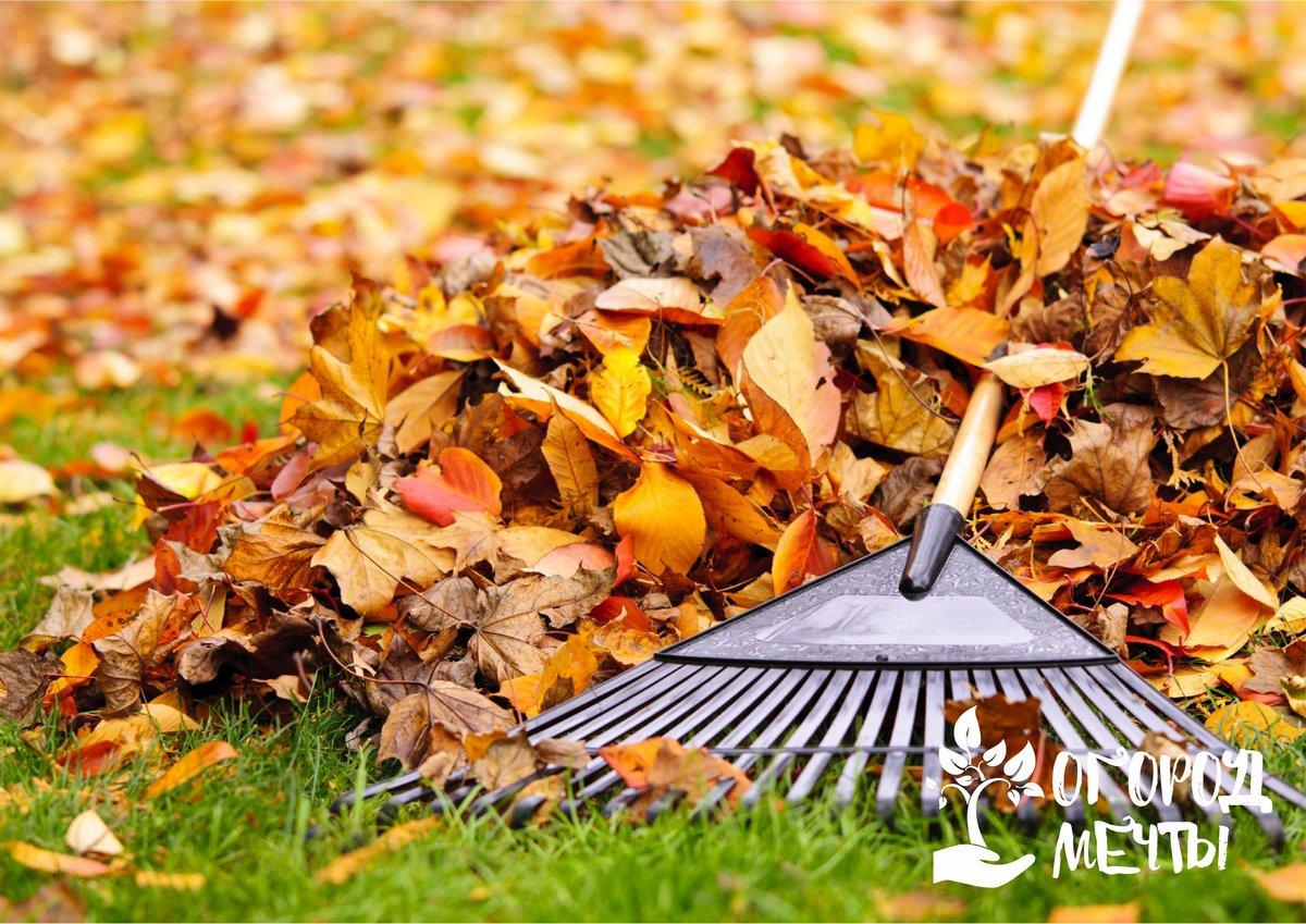 покров из сухой листвы пойдет только на пользу почве и растениям