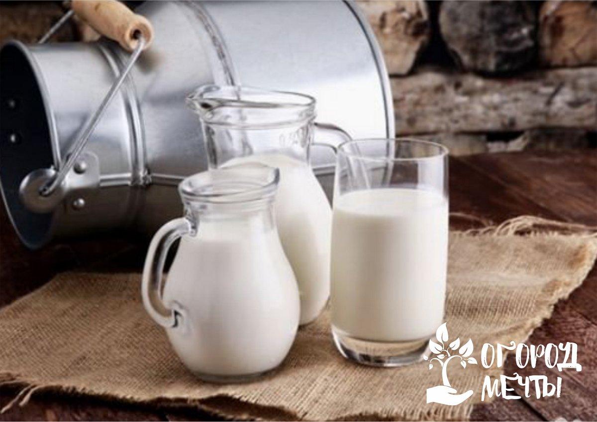 Молоко оживляет уставшие растения
