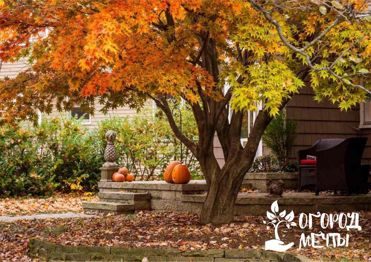 Листья стоит оставить лежать на земле по периметру кроны