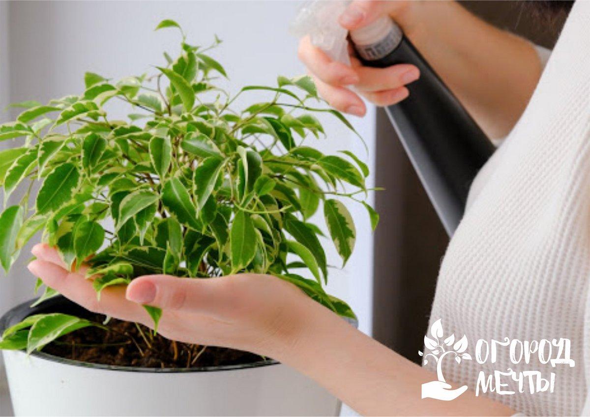 Мыльная вода — эффективное средство от тли
