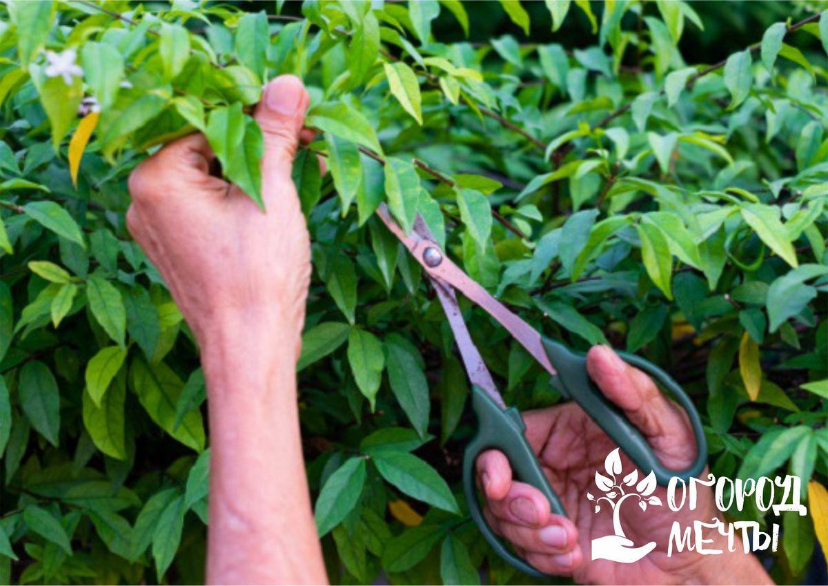 срезы данных растений плохо затягиваются