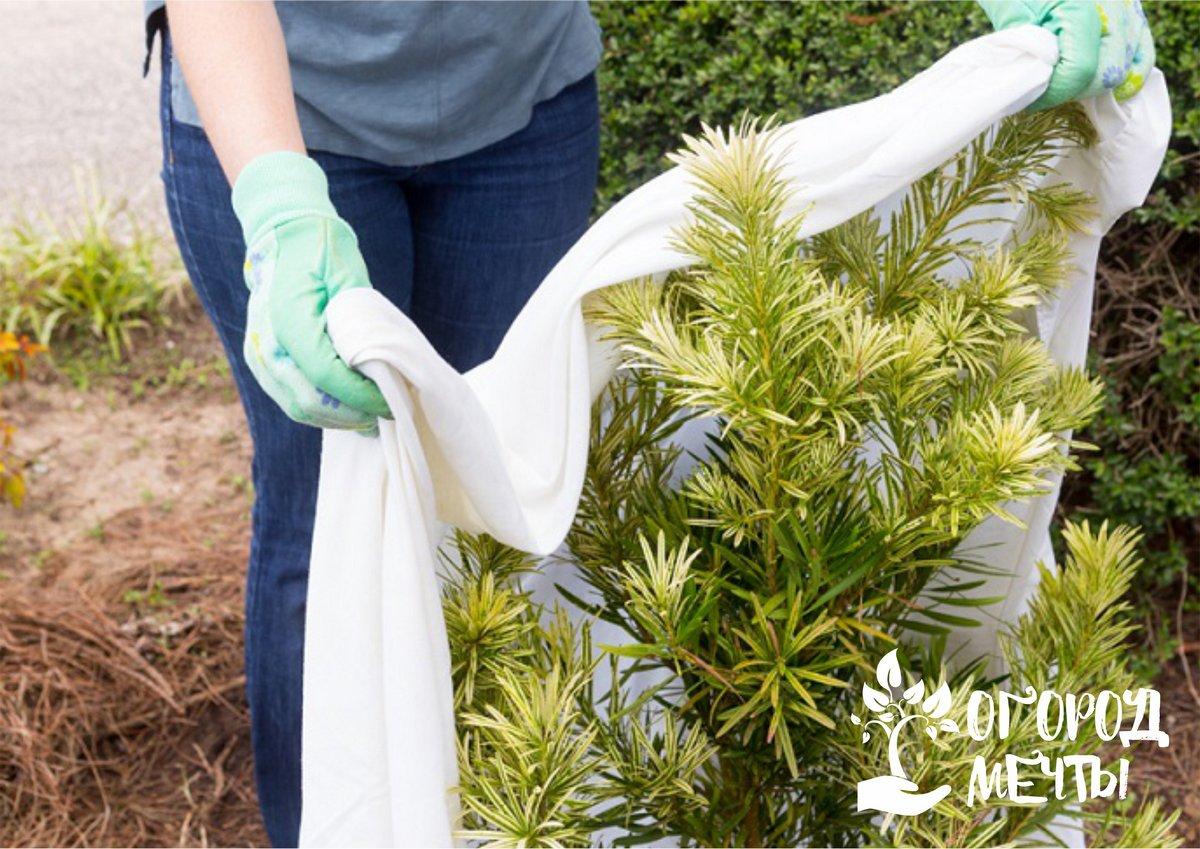 можно ли укрывать растения на зиму мхом?