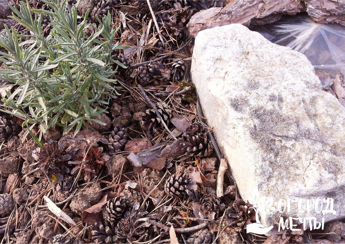 Солнцелюбивые сорняки (одуванчик, клевер) лучше всего уничтожать, накрыв на несколько дней