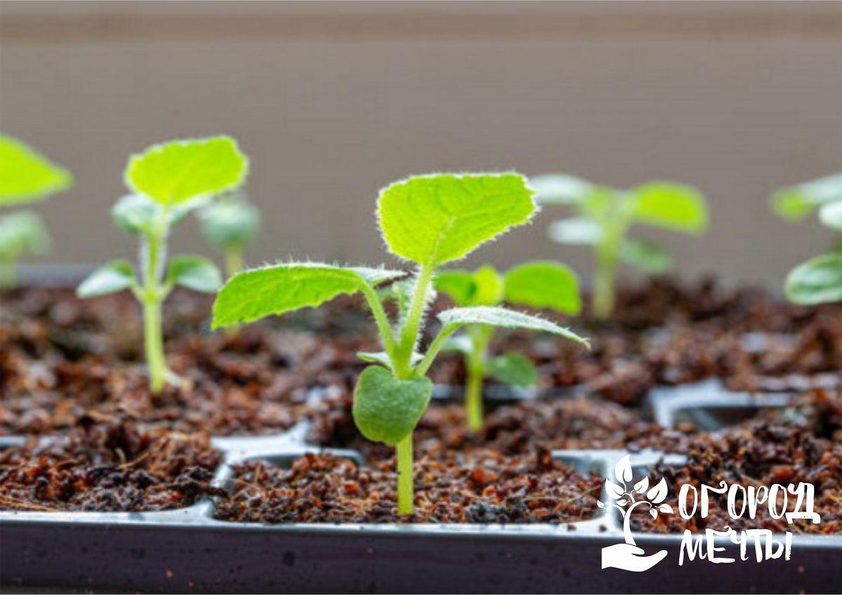 многие огородники и садоводы остаются в восторге от материала для посадки