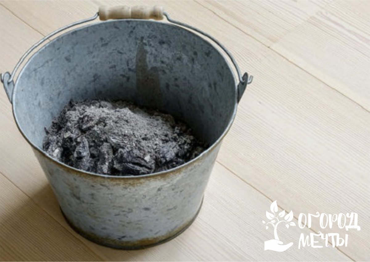 подкормить грунт настоем или сухим порошком древесной золы