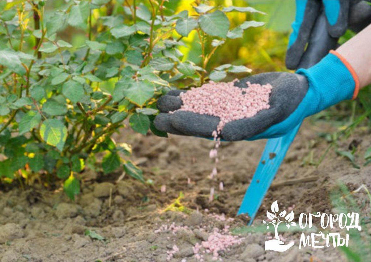 подкормить виноград осенью для вызревания лозы в осеннее время