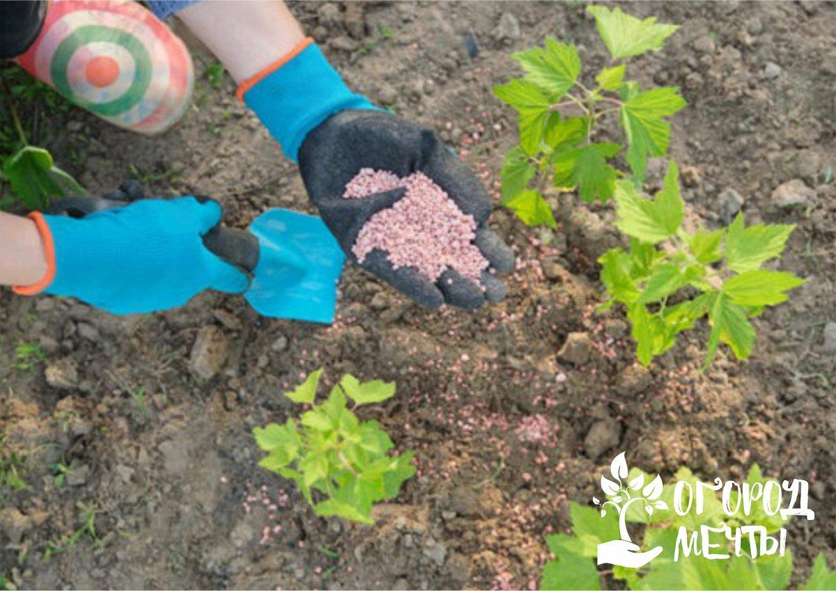 """Хорошо сказываются на росте растения такие комплексы, как: """"Кристалон"""", """"Растворин"""", """"Флоровит"""","""