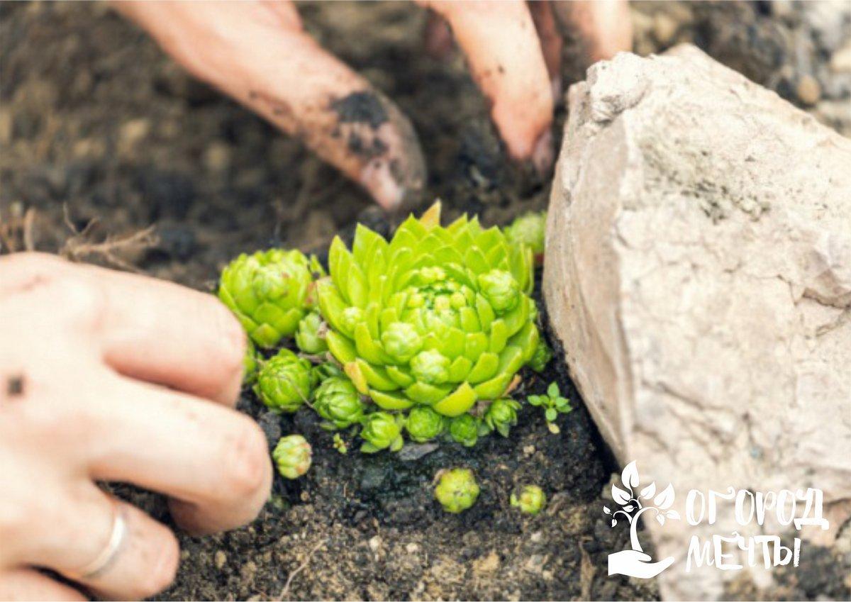 В саду также можно высадить такие кустарники