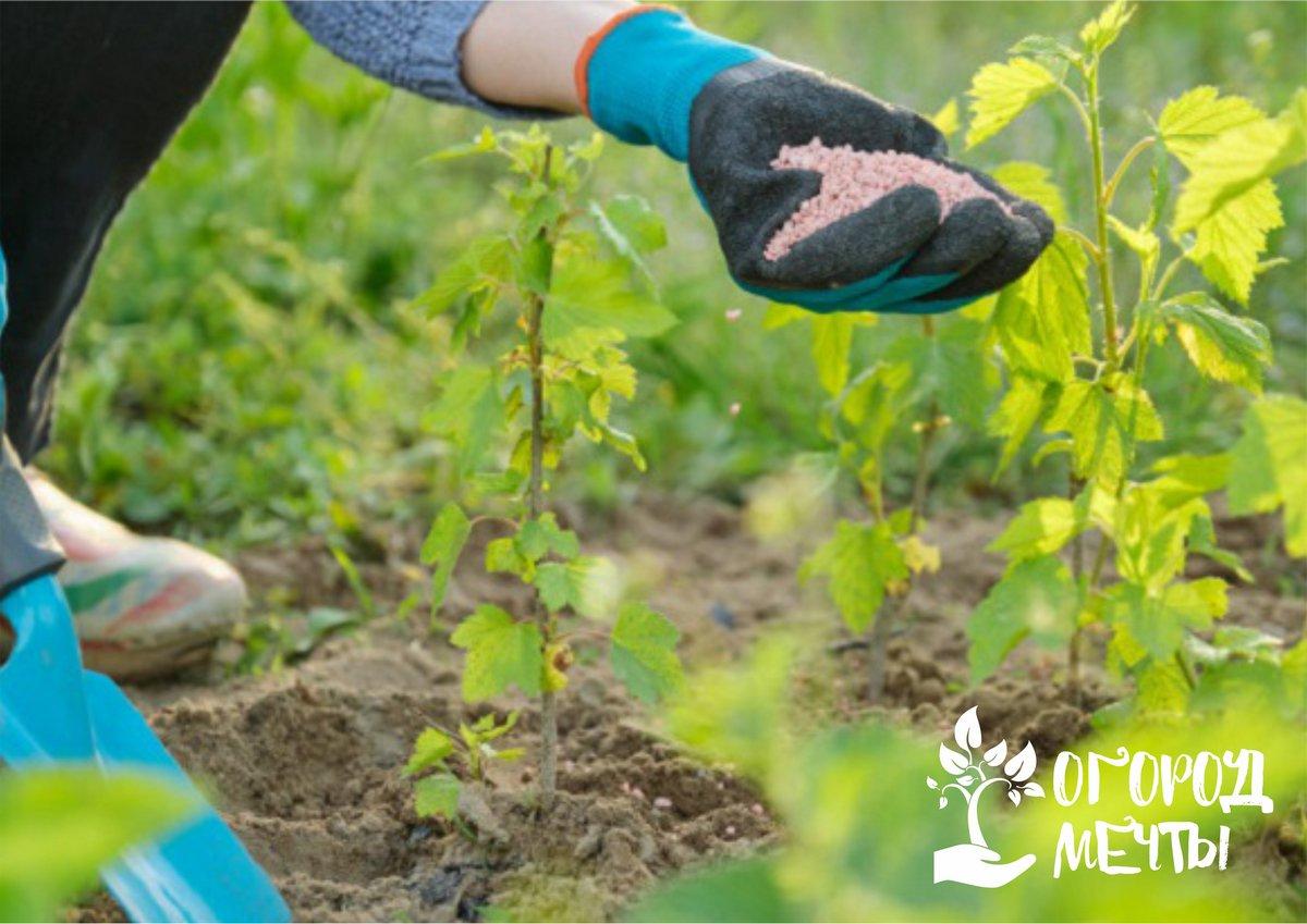Подкормка виноградных кустов калийными удобрениями в осеннее время