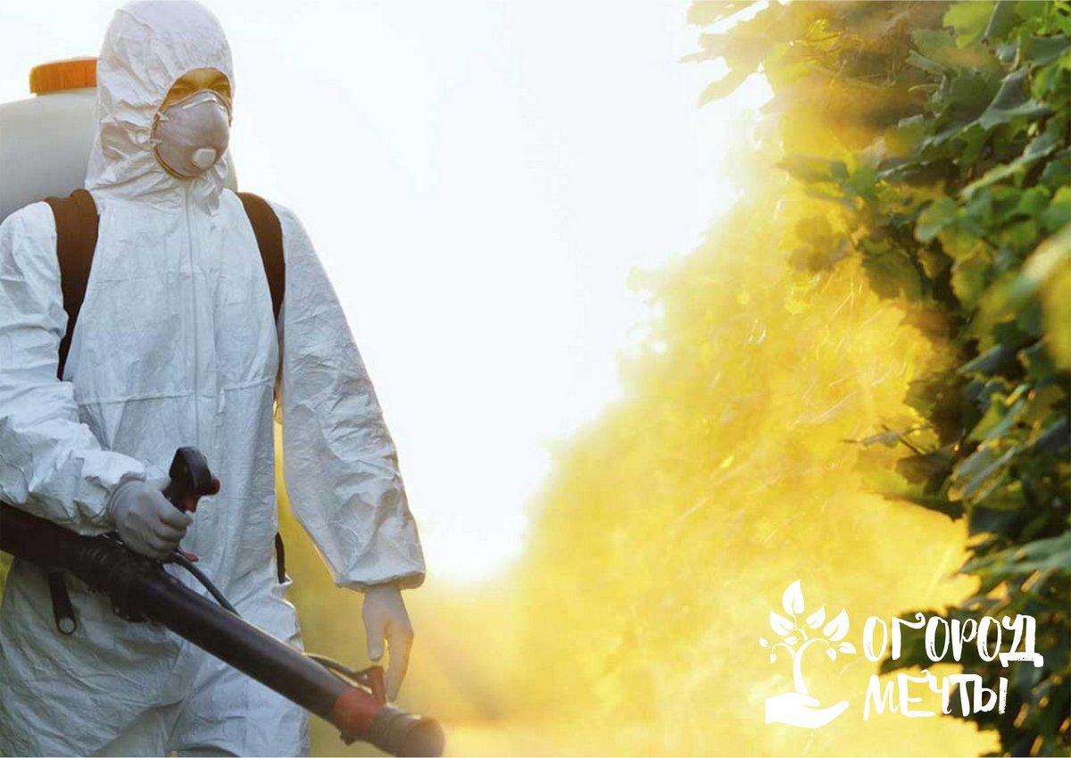 Борьба с болезнями и вредителями