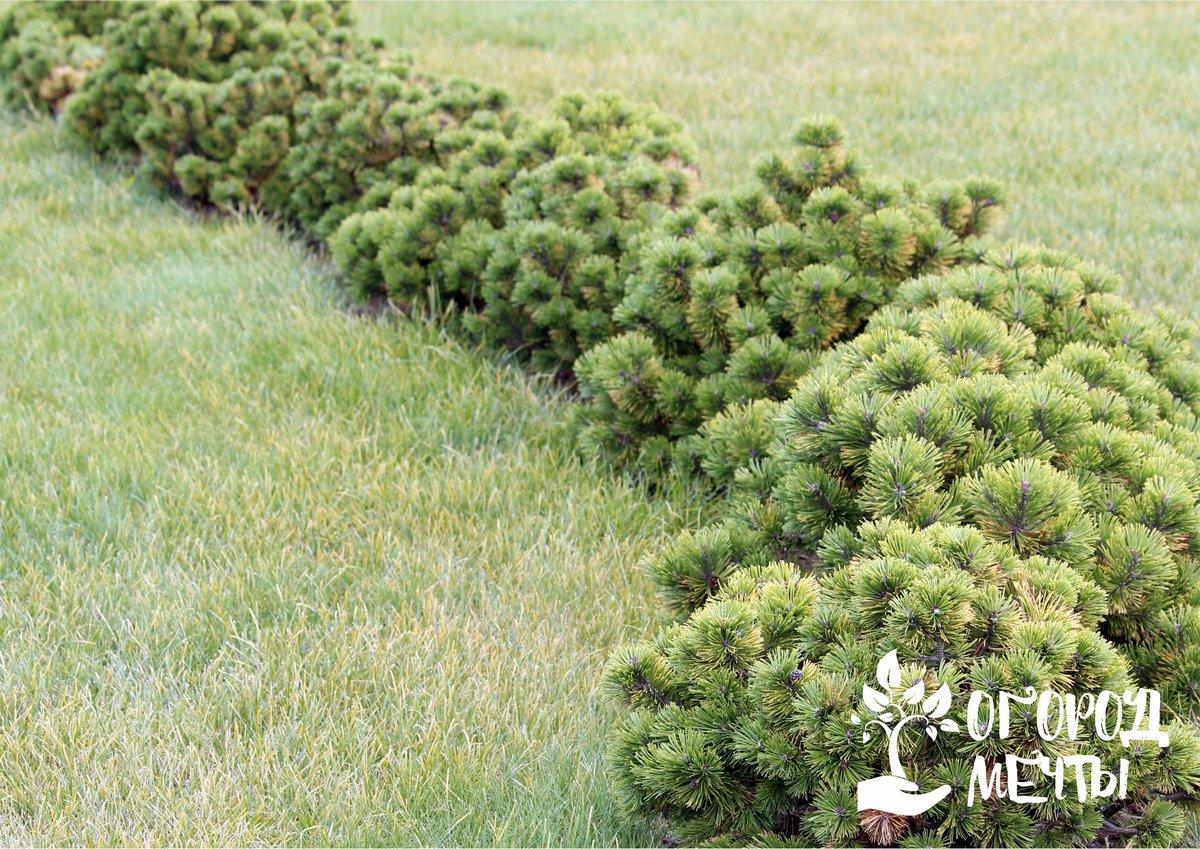 Как приготовить компост и мульчу из скошенной газонной травы