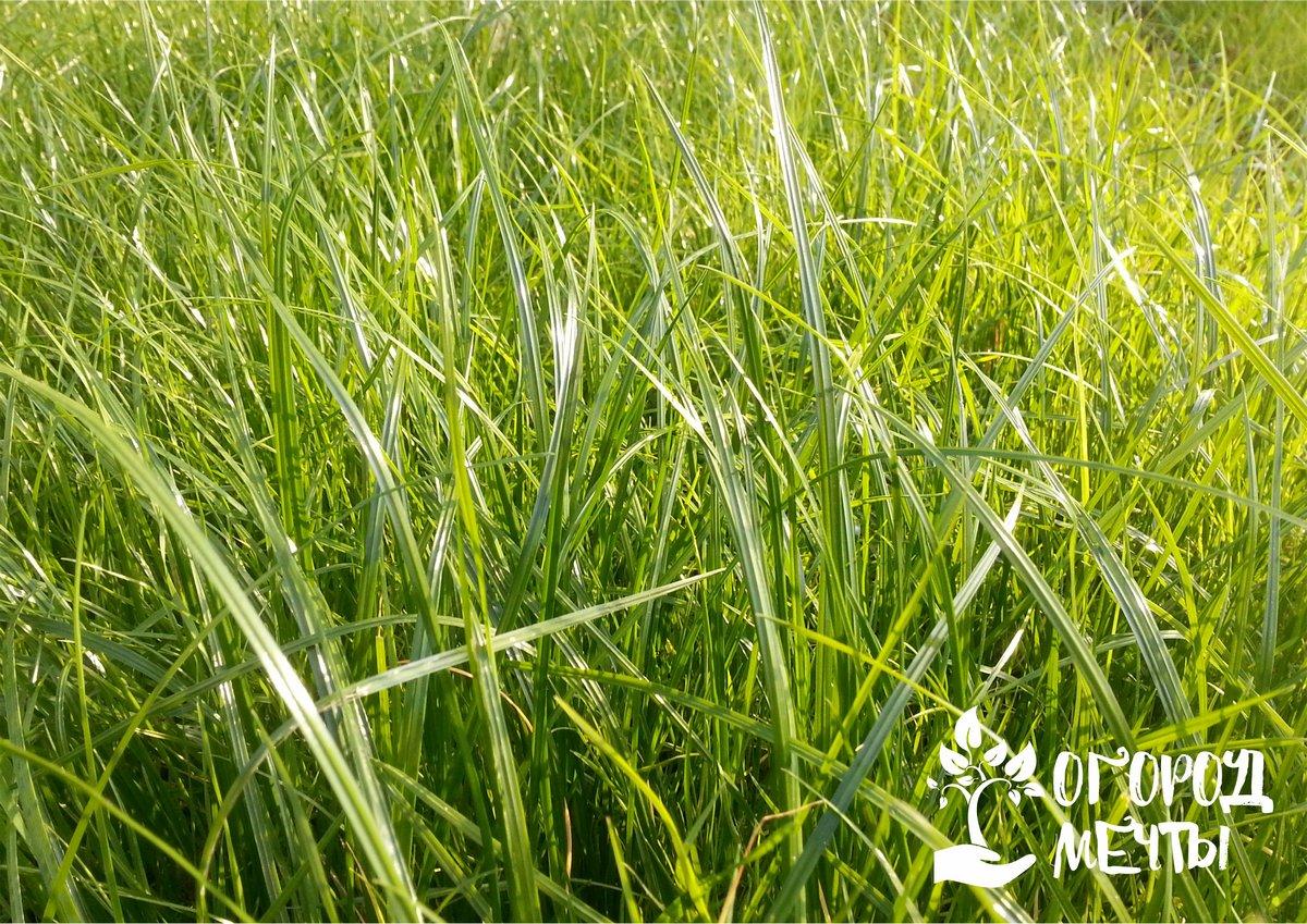 Просушите траву