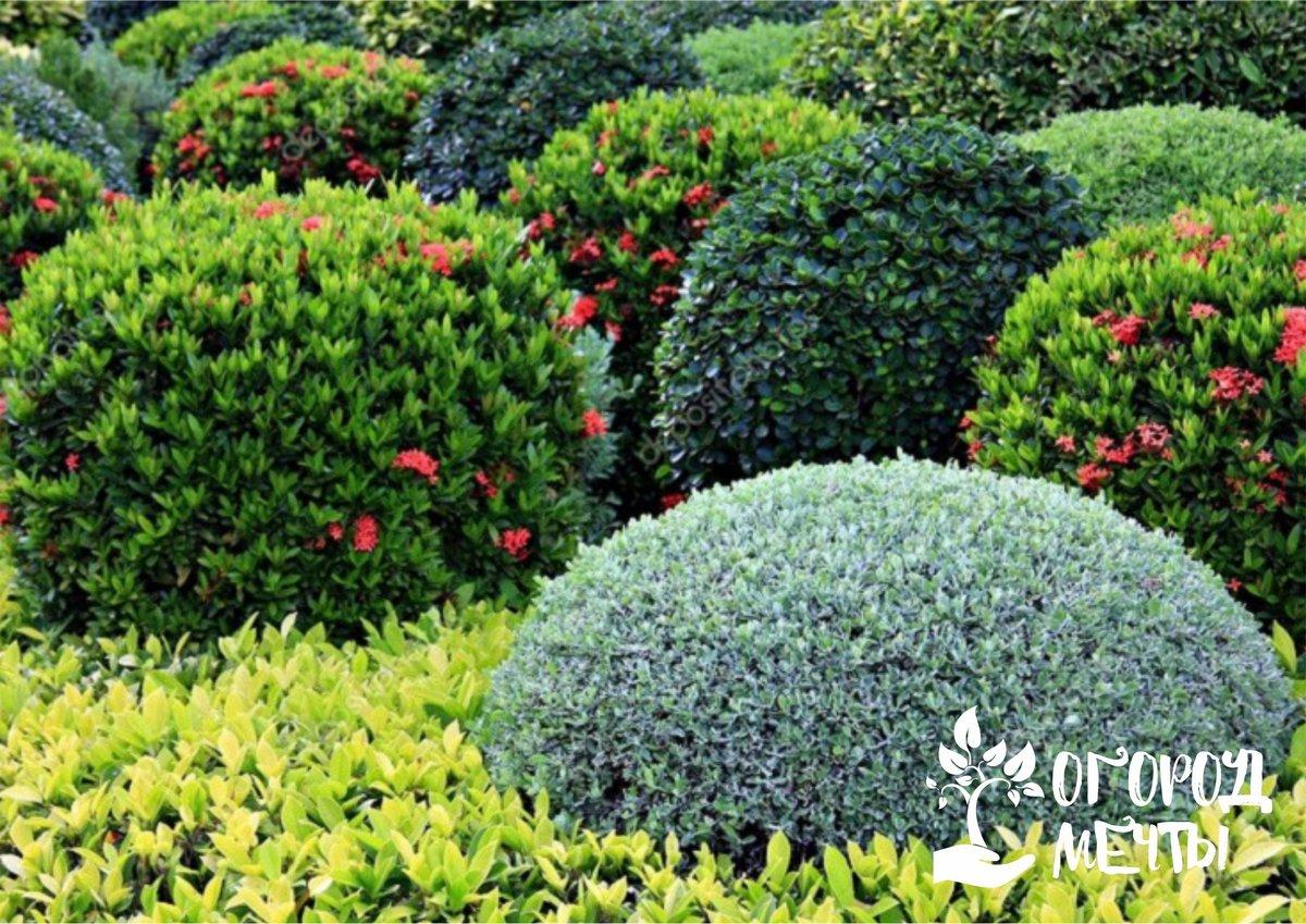 Как правильно разместить цветочные кустарники на садовом участке