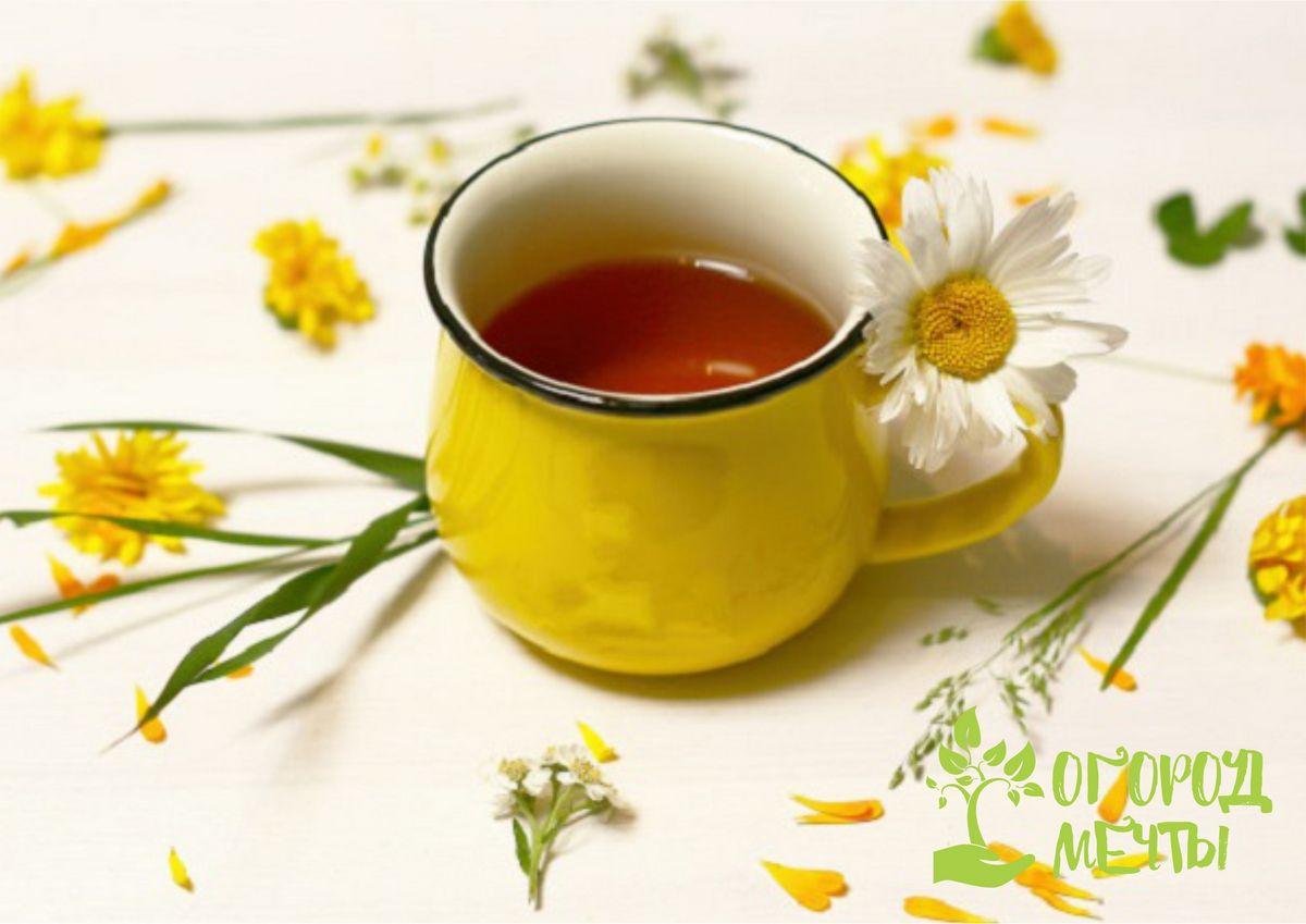 Топ-11 полезных садовых трав для сада: для чайных композиций, напитков и оздоровления