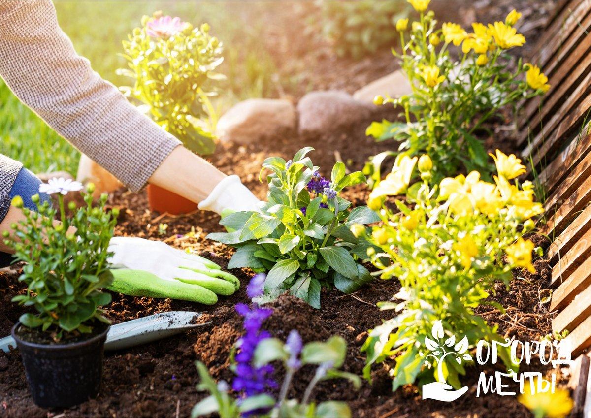 Профилактика нематоза на огородном и садовом участке