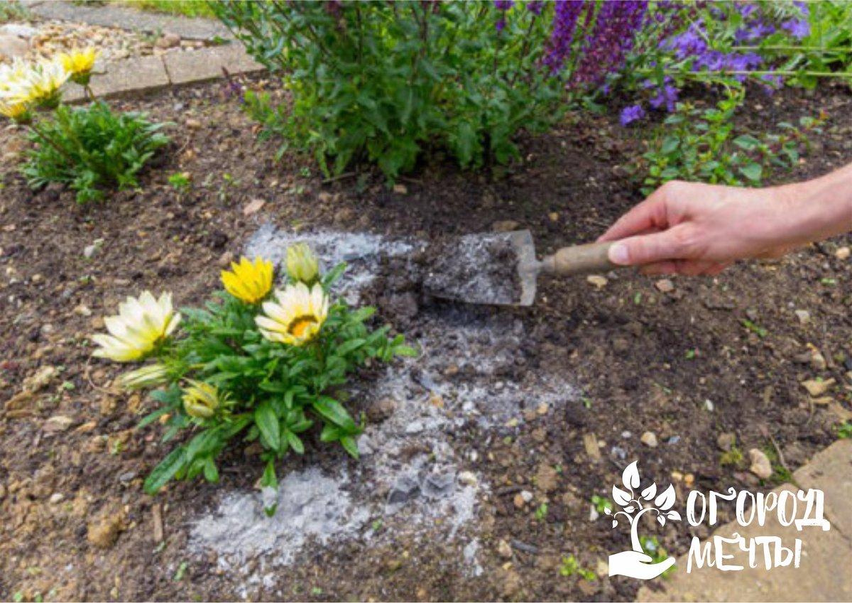 Применение золы для комнатных растений и цветов
