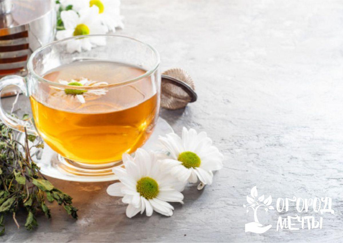 Особенности выращивания чайных трав в саду