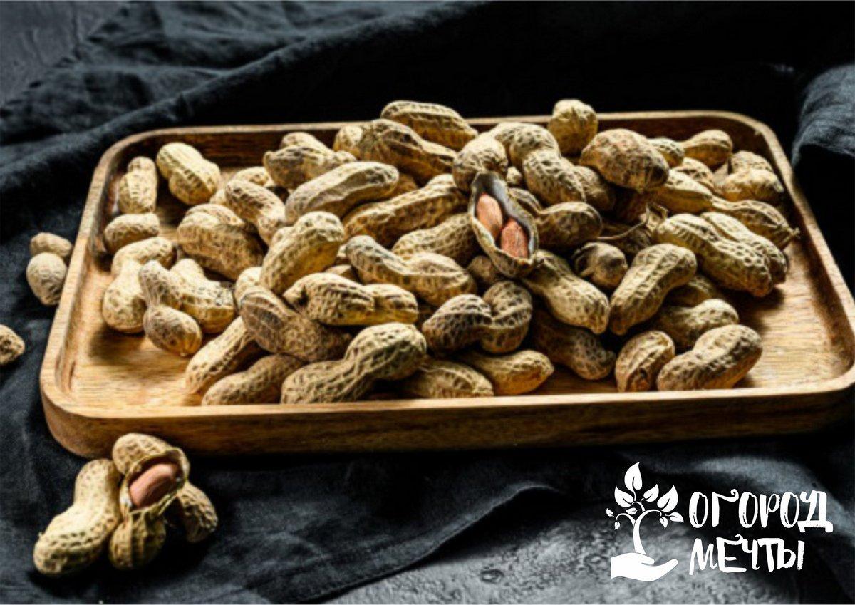 Как собирать урожая с арахисовых кустов