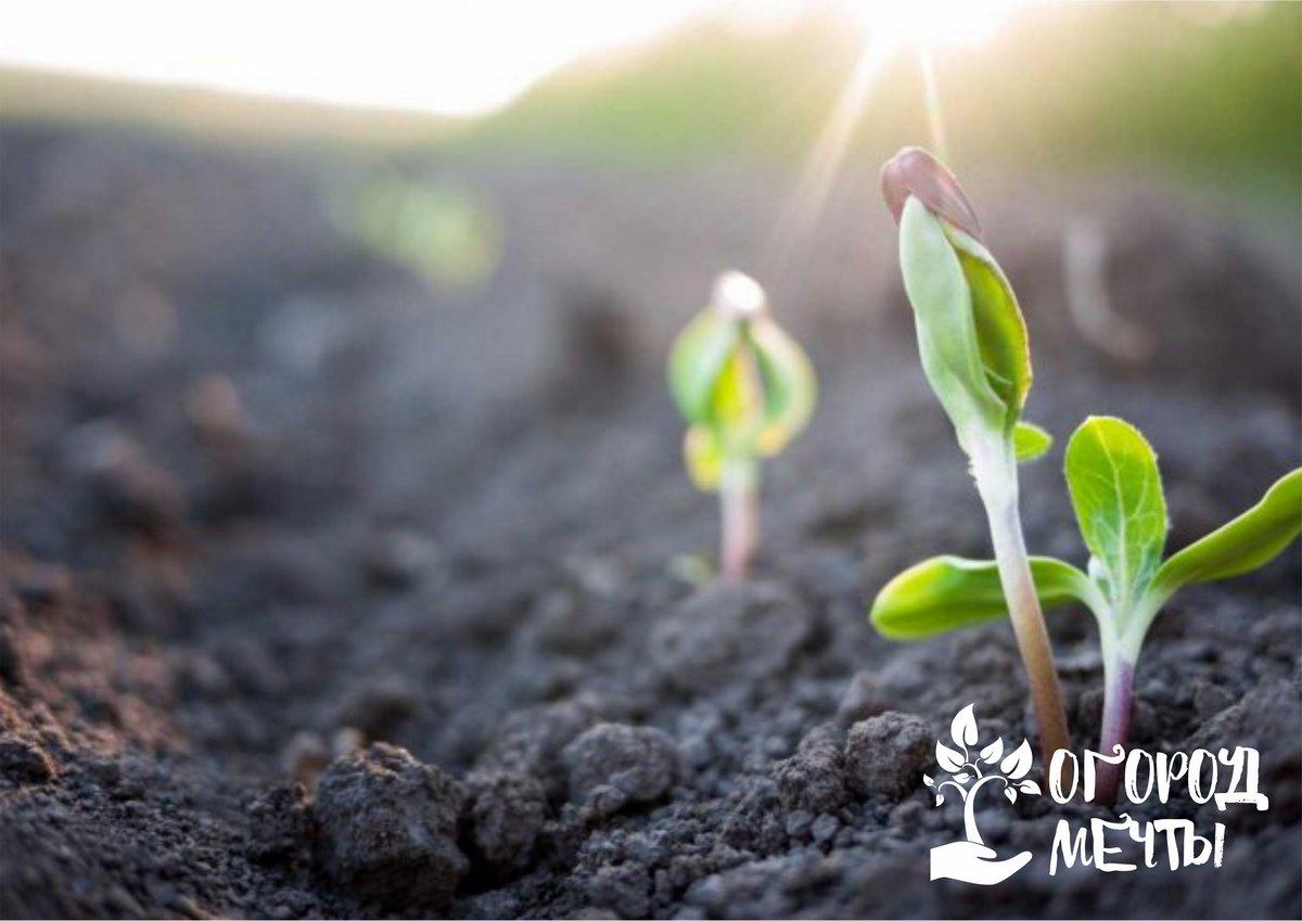 Влажный участок: какие растения можно выращивать, если почва никогда не просыхает