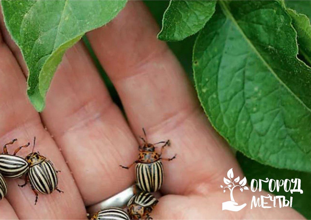 Механический сбор насекомых