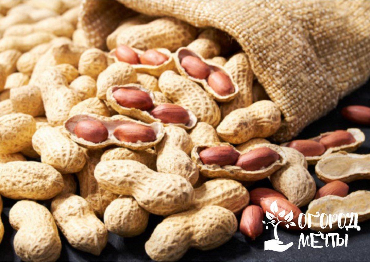 Выращивание арахиса на огороде: секреты и нюансы