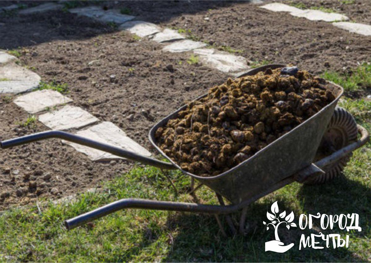 Применение конского навоза в огороде