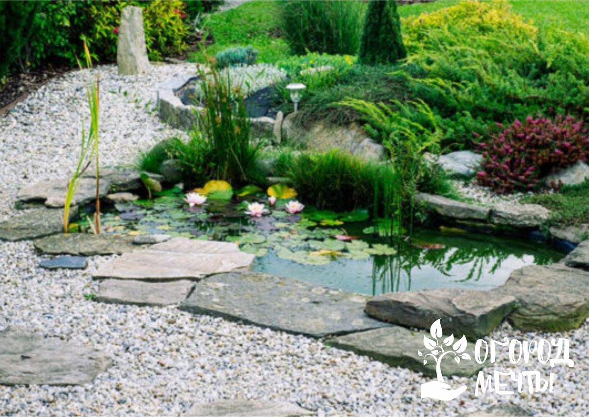 • купаться в искусственном водоеме с растениями не рекомендуется