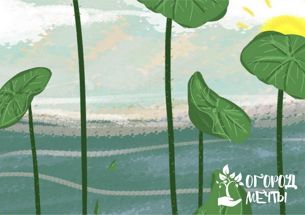 Изысканные и красивые водные растения для садового пруда