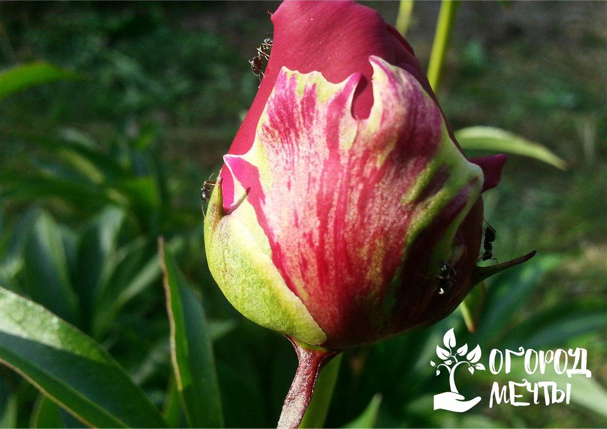 Топ-13 растений, которые украшают сад и защищают от насекомых и болезней