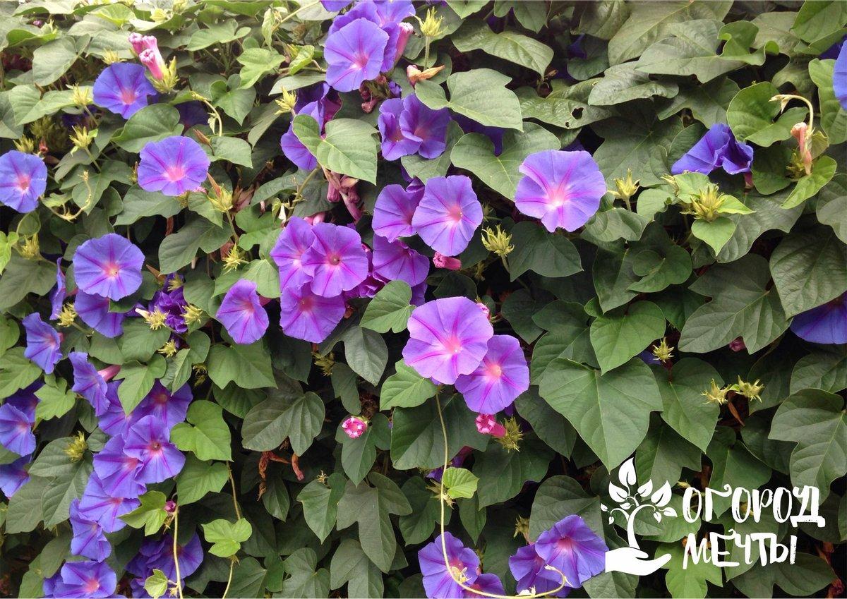 Украшаем сад: 10 советов, которые помогут создать идеальную цветочную стену