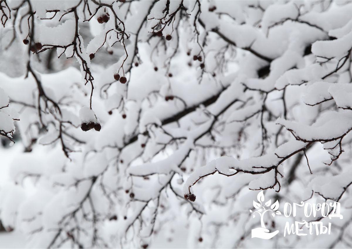 Каких ошибок нельзя допускать, спасая посадки от холода зимой: