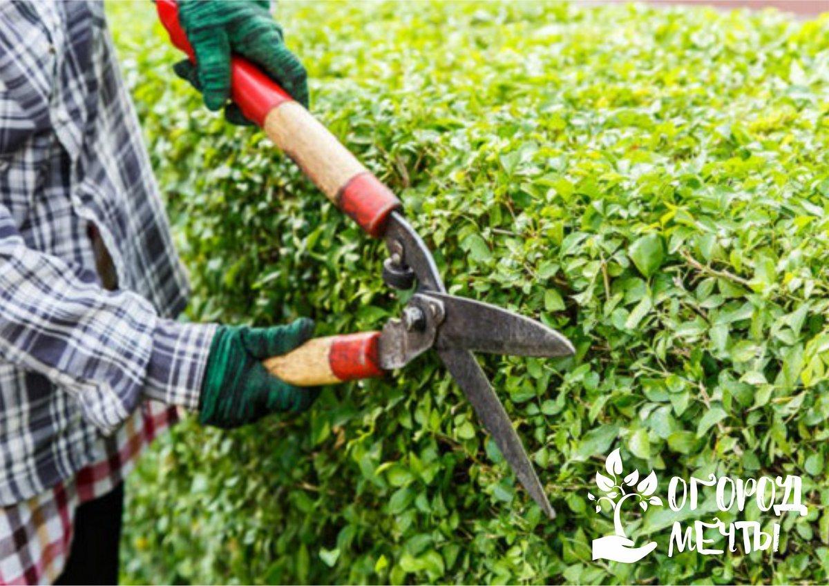 Почему ваши садовые инструменты быстро выходят из строя
