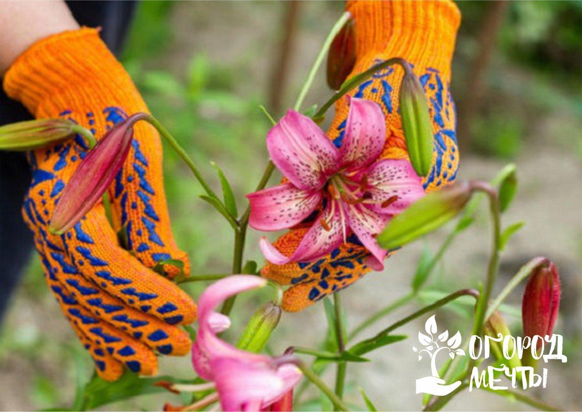 Защита луковичных растений