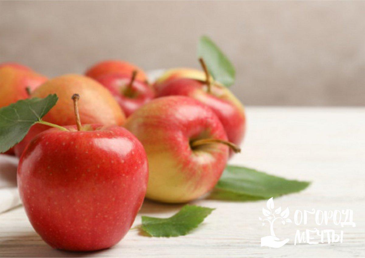 Подготовка плодов к хранению