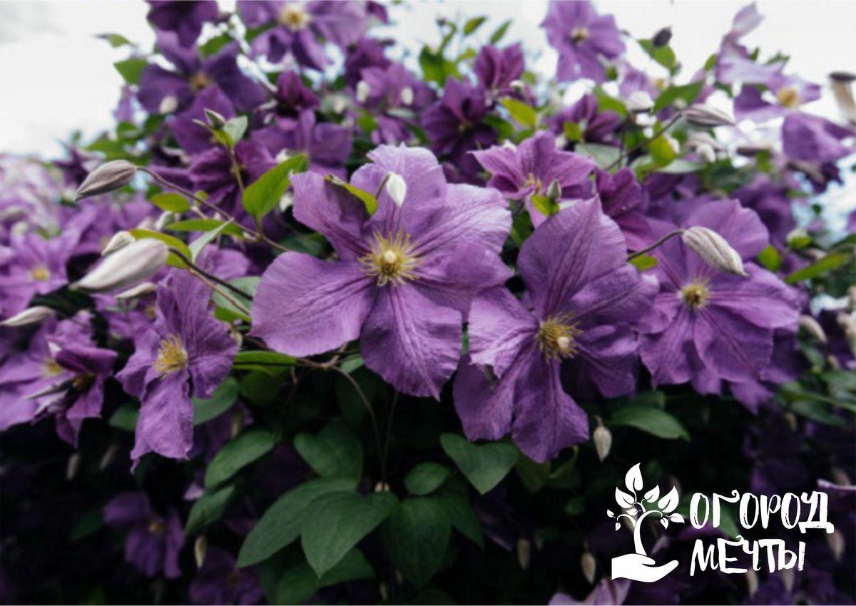 Топ-10 растений для садовых арок