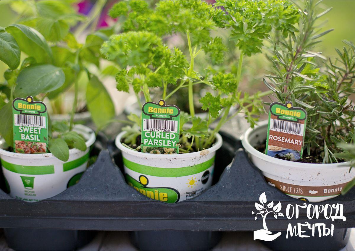Выбирать надо средние растения