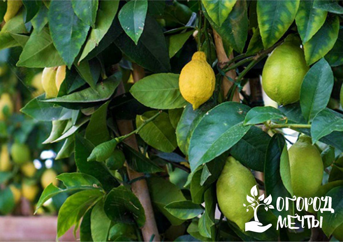Контроль обрезки плодово-ягодных культур