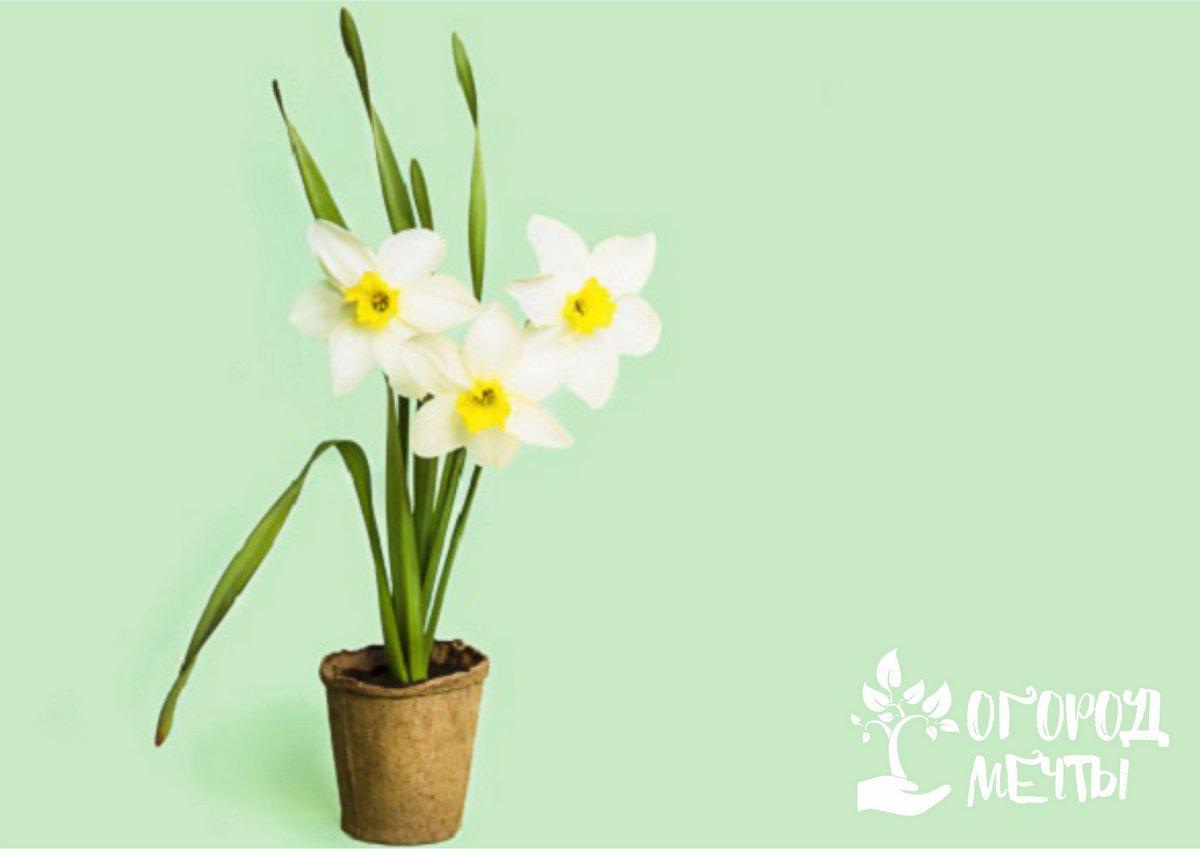 Досвечивание орхидных растений