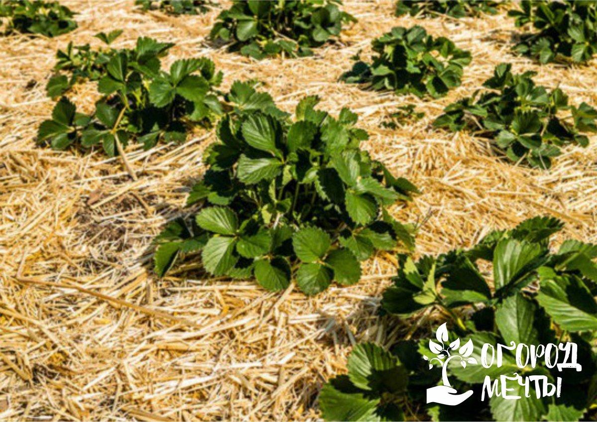 Польза мульчирования для растений